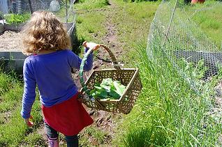 Organic Free-Range Chickens