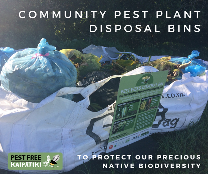 Make use of the community pest plant disposal bins this summer