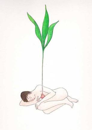 les végétales 17