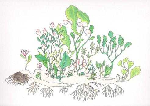 les végétales 2