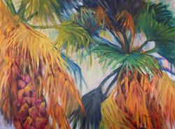Palms of Cortez Road