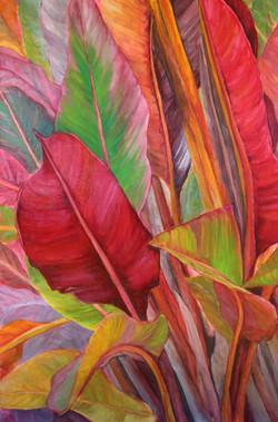 Big Island Ti Leaves
