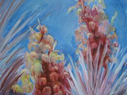 Botanical Garden Yucca