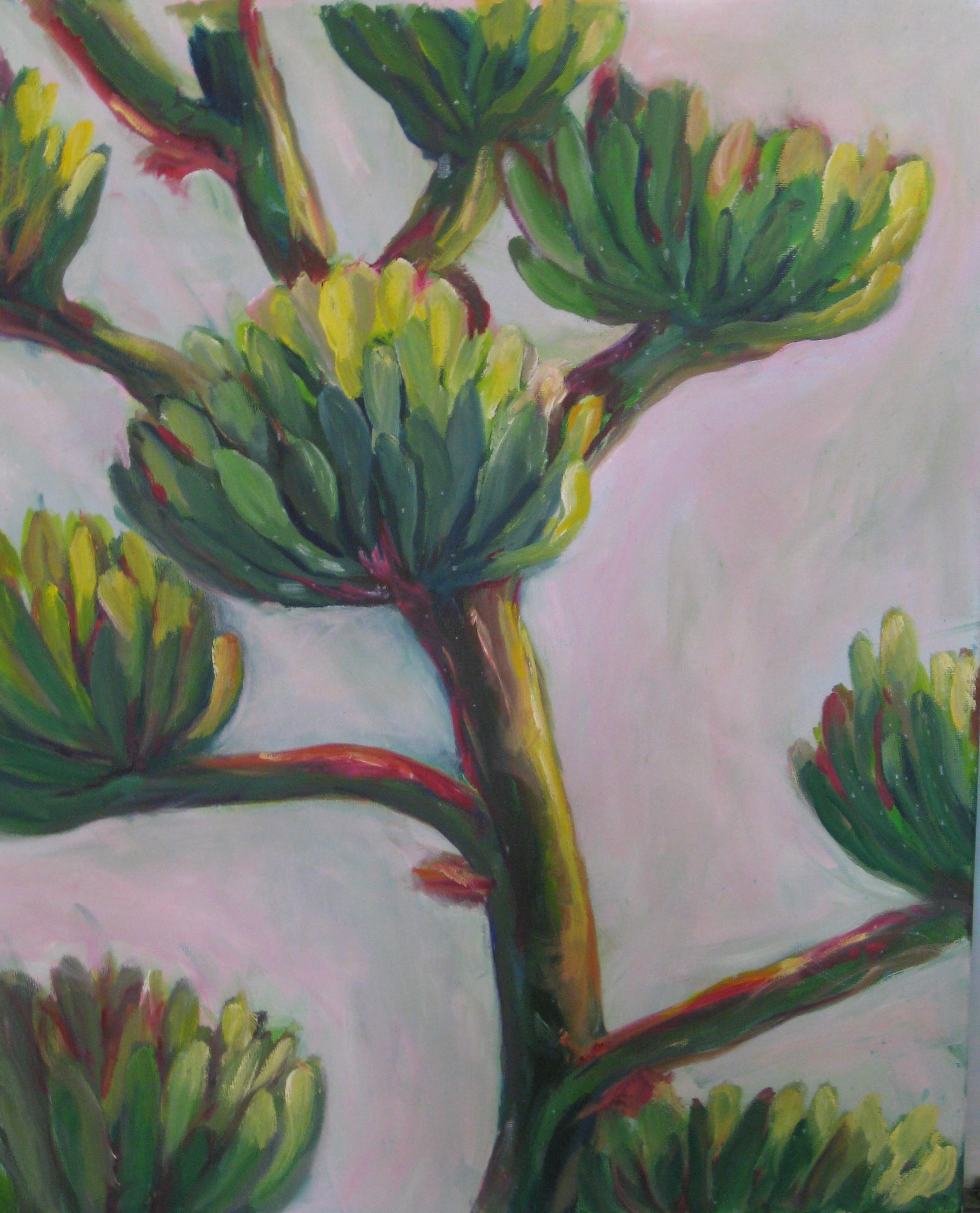 Agave Blooming, Arizona