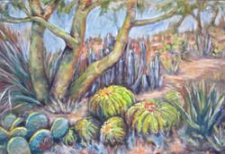 Papago Desert Garden