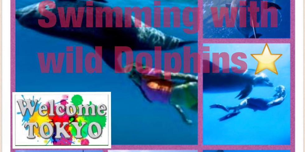 🐬Adventure Tokyo Island, Swimming with Wild Dolphin, BBQ, Meetup イルカと泳ぐ南の島の海🏖