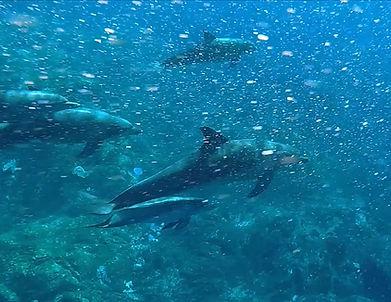 dolphins headshot.jpg