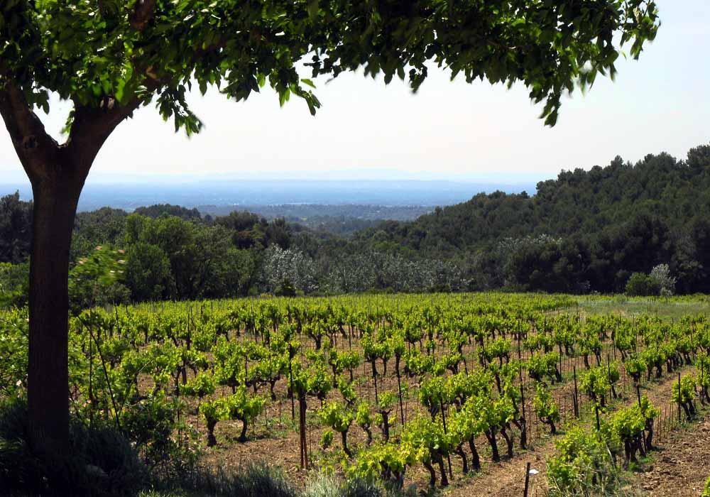 wine tour trail.great views. terroir