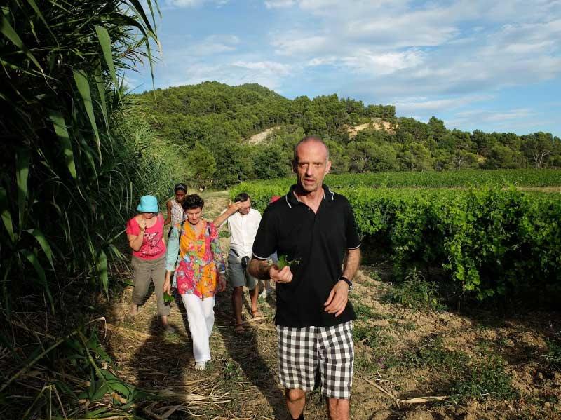 Group tour of vineyard
