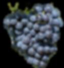 Grenache South Rhone, key varietal