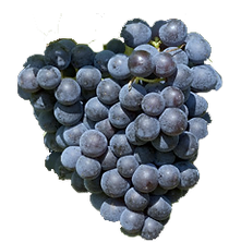 Grenache South Rhone, key varietal