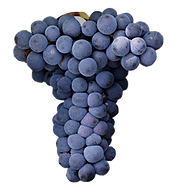 Mourvedre Grappe