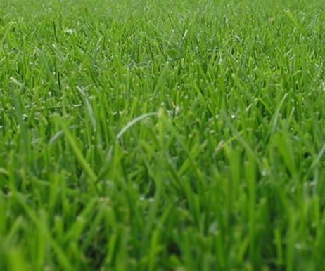 AGS Fachseminar Rasen ist nicht gleich Rasen