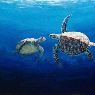 Turtle Love.jpg