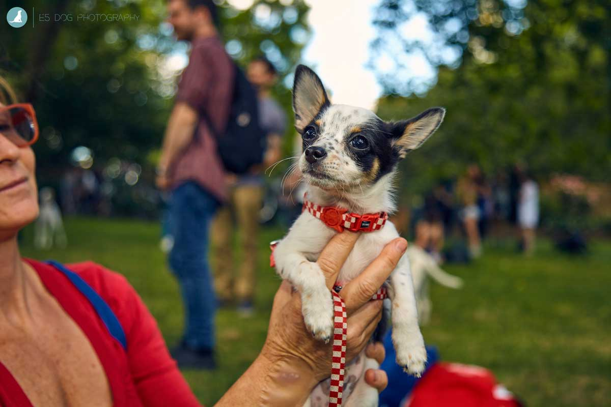 E5-Dog-Photography-All-Dogs-Matter-Visions-Festival-Hackney-2016-54