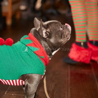 Santa Paws Doggy Brunch 2017 - 34