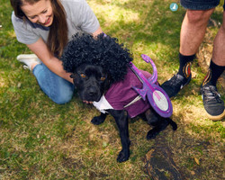 E5-Dog-Photography-All-Dogs-Matter-Visions-Festival-Hackney-2016-36