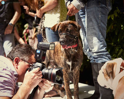 Pup Idol Show 2016