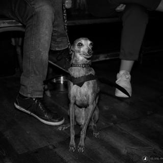 E5_Dog_Photography_2885.1.jpg