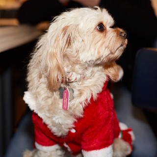 Santa Paws Doggy Brunch 2017 - 51