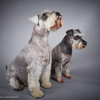 Milo & Millie