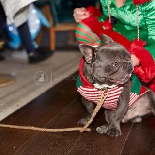 Santa Paws Doggy Brunch 2017 - 29