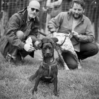 E5 Dog Photography - All Dogs Matter - 27