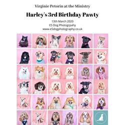 Harley Birthday Pawty 2020