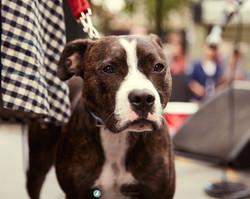 Hackney Dog Show 2016
