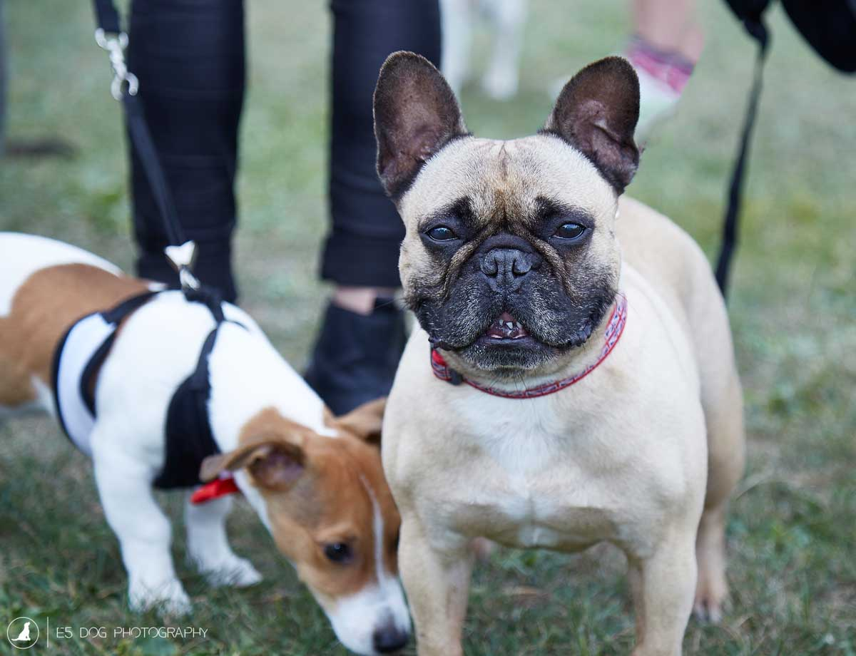 E5_Dog_Photography_PupAid_Primrose_Hill_2016_057
