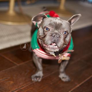 Santa Paws Doggy Brunch 2017 - 32