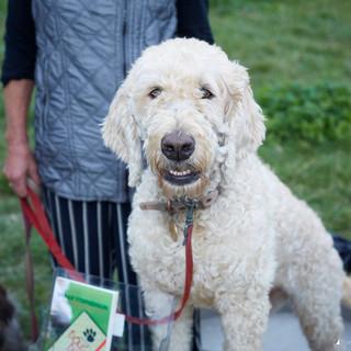 5 Dog Photography - Mudchute