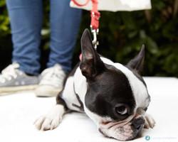 E5-Dog-Photography-AllDogsMatter-03