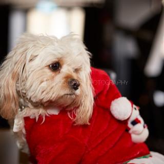 Santa Paws Doggy Brunch 2017 - 44