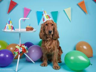 Celebration - Coco's Birthday Party