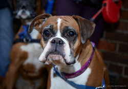 E5_Dog_Photography_Valentine2017_All_Dogs_Matter24