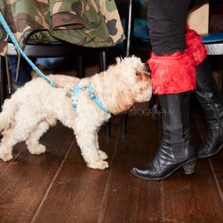 Santa Paws Doggy Brunch 2017 - 49
