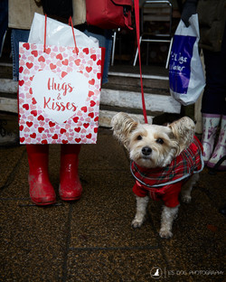 E5_Dog_Photography_Valentine2017_All_Dogs_Matter8