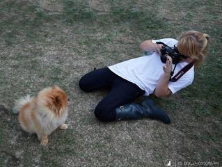 Favourite Fun Dog Photoshoot Ideas