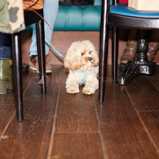 Santa Paws Doggy Brunch 2017 - 36
