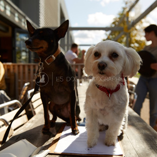 Dog's Day Out at the Shane Canal Side - 14