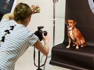 Four Great Tips to Make the Most of Dog Portraits
