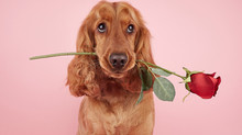 8 Reasons Why Your Dog Is the Best Valentine's Day Date