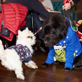 Santa Paws Doggy Brunch 2017 - 41