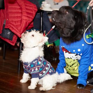 Santa Paws Doggy Brunch 2017 - 38