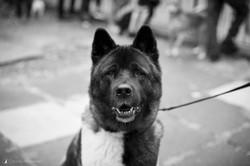 E5_Dog_Photography_ADM_DogFactor_2017_457 1