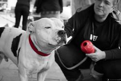 E5_Dog_Photography_DotsLondon_315