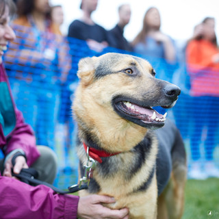 E5 Dog Photography - All Dogs Matter - 26