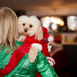 Santa Paws Doggy Brunch 2017 - 45