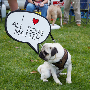 E5 Dog Photography - All Dogs Matter - 21